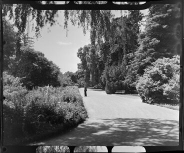 Image: Unidentified man in the Botanic Gardens, Christchurch