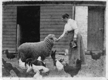 Image: Woman feeding a sheep