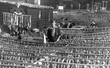 Image: School boys hanging out rabbit skins to dry, at Petone