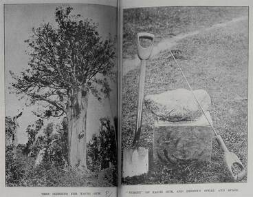 Image: Tree climbing for kauri gum, nugget of kauri gum and digger's spear and spade