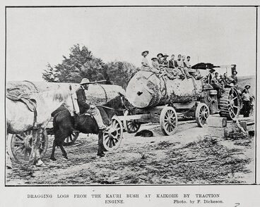 Image: DRAGGING DOGS FROM THE KAURI BUSH AT KAIKOHE BY TRACTION ENGINE.