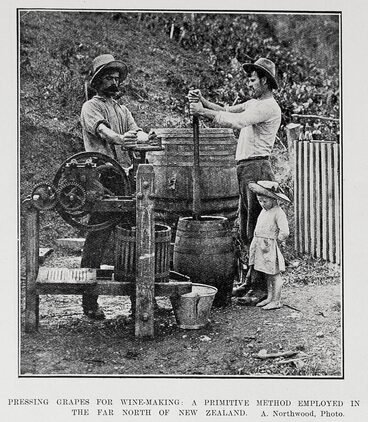 Image: PRESSING GRAPES FOR WINE-MAKING: A PRIMITIVE METHOD EMPLOYED IN THE FAR NORTH OF NEW ZEALAND.