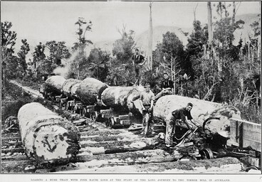 Image: LOADING A BUSH TRAIN WITH FINE KAURI LOGS AT THE START OF THE LONG JOURNEY TO THE TIMBER MILL IN AUCKLAND.