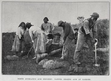 Image: North Auckland's gum industry: natives digging gum at Kaikohe