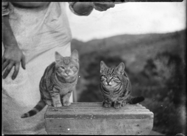 Image: Cats on a stool