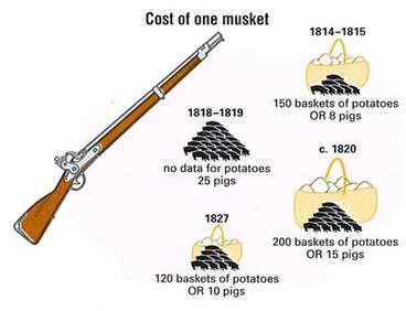 Image: Changing cost of muskets 1814-1827