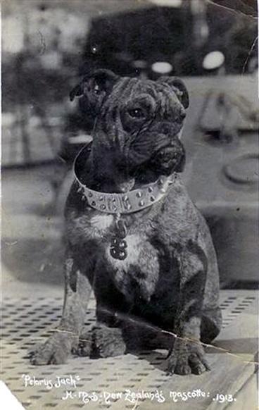 Image: Pelorus Jack in 1913