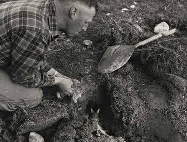 Image: Digging up rabbit holes