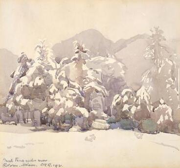 Image: Beech trees under snow, Rotoroa, Nelson
