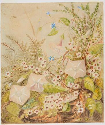 Image: Untitled (Native Flowers)