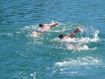 Image: Harbour Swimmers