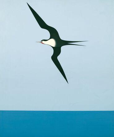 Image: Pacific frigate bird I