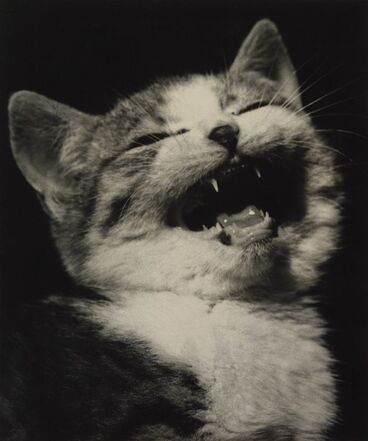 Image: Laughing kitten