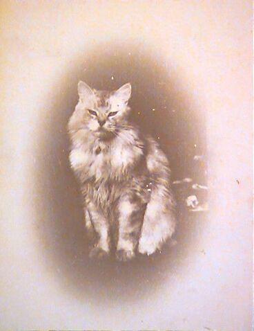 Image: Supercilious cat