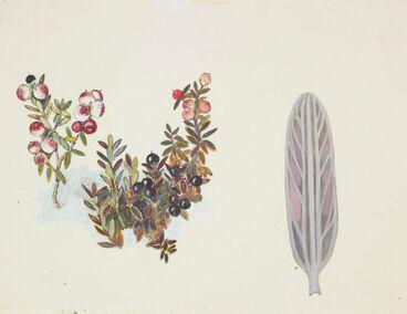 Image: Epacridaceae - Cyathodes colensoi