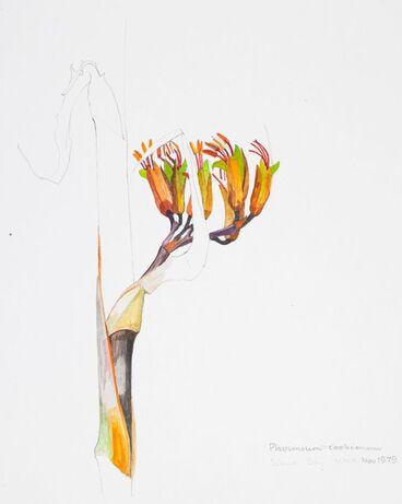 Image: Agavaceae - Phormium cookianum