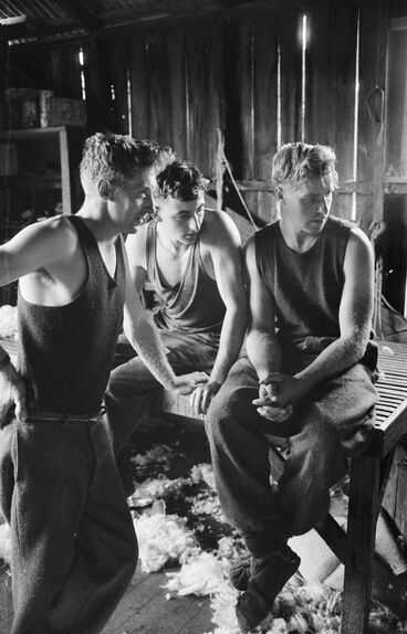 Image: Shearers. Taken for 'New Zealand, gift of the sea' (1963)