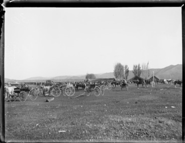 Image: Visiting buggies, during a meeting of the Maori parliament at Pakirikiri near Gisborne