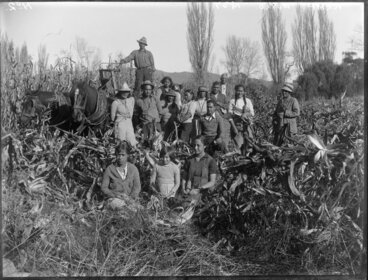 Image: Maori family group with a maize crop