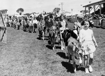 Image: Children walking with their calves during the Egmont Agricultural and Pastoral Show at Hawera