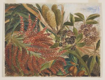 Image: Harris, Emily Cumming, 1837?-1925 :[Kiekie (freycinetia banksii), nikau (rhopalostylis sapida), five finger (pseudopanax arboreum) and karaka (corynocarpus laevigata) in fruit]. 1879.
