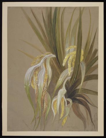 Image: Harris, Emily Cumming, 1837?-1925 :Astelia cunninghamii. (Kowharowharo). [Between 1880 and 1900?]