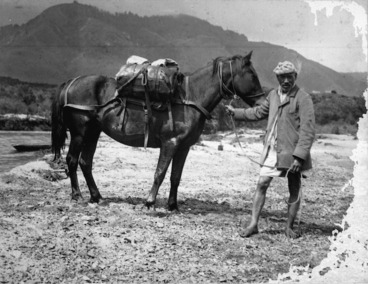 Image: Ross, Malcolm, 1862-1930 :Poison and his pack horse