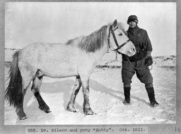Image: Dr Wilson and pony Nobby, Antarctica