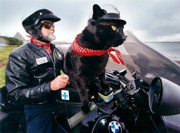 Image: Rastus the motorcycle-riding cat