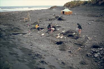 Image: Excavating a moa-hunter camp