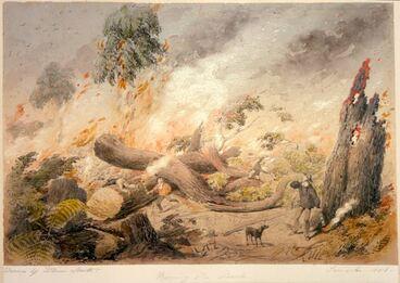 Image: Burning the bush, Taranaki