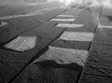 Image: Kāingaroa State Forest, 1960