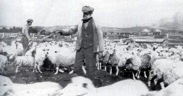 Image: Scottish shepherd