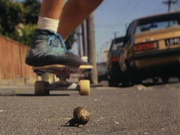 Image: Snail's Pace