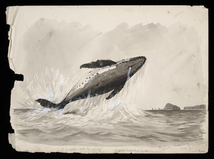 """Ryan, Thomas, 1864-1927 :""""E piki ana ki runga""""; a whale breaching off Whangamumu. """"Whale breaching"""". July 3. 95."""
