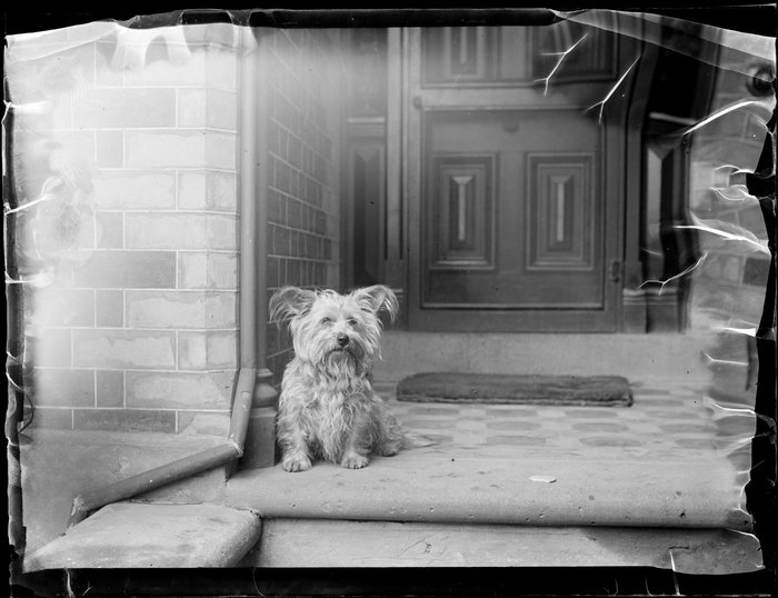 Dog on porch of house, location unidentified