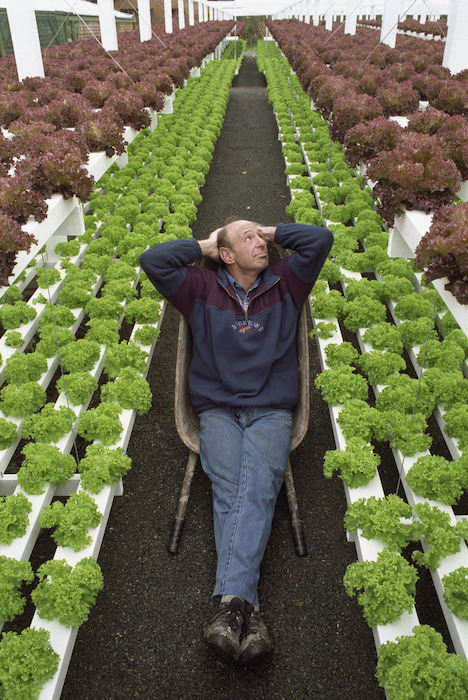 Phil Henderson sitting amongst hydroponically grown lettuces - Photograph taken by Ross Giblin