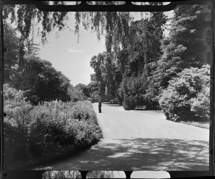 Unidentified man in the Botanic Gardens, Christchurch