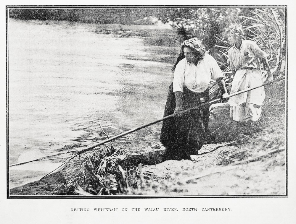 NETTING WHITEBAIT ON THE WAIAU RIVER, NORTH CANTERBOURY.