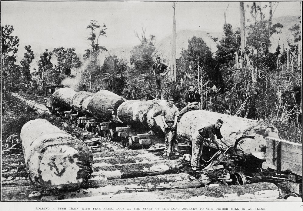 LOADING A BUSH TRAIN WITH FINE KAURI LOGS AT THE START OF THE LONG JOURNEY TO THE TIMBER MILL IN AUCKLAND.