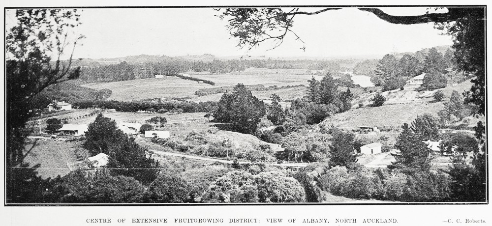 CENTRE OF EXTENSIVE FRUITGROWING DISTRICT: VIEW OF ALBANY, NORTH AUCKLAND.