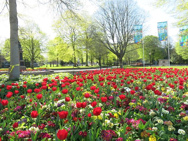 Victoria Square flowers