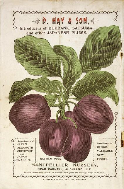 D Hay & Son, Nurserymen :D. Hay & Son, introducers of Burbank, Satsuma, and other Japanese plums. Clyman plum. Montpellier Nursery near Parnell, Auckland, N. Z. [Catalogue back cover]. 1899.