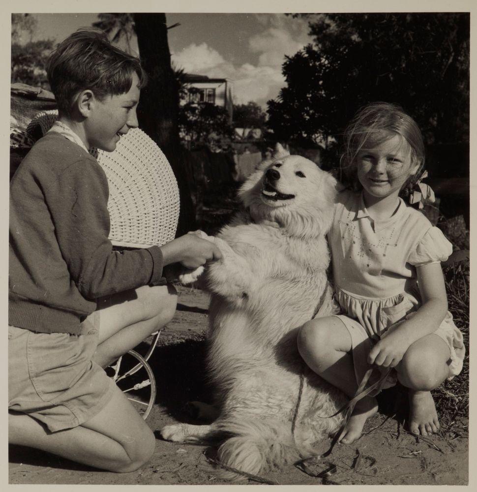 Begbie the dog, Northland