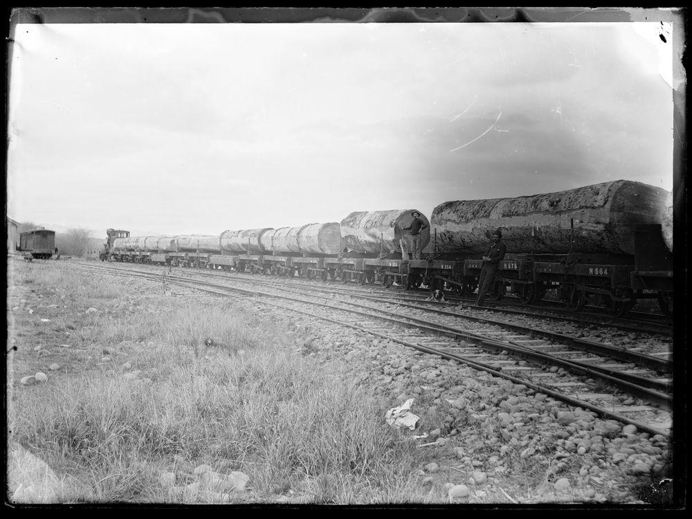 Train kauri logs