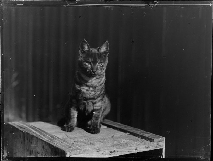 Cat sitting on wooden box, location unknown