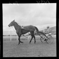 Trotting, Hutt Park Raceway, Lower Hutt
