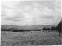 Pastoral view of Hautu Prison farm