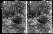 Native bush, unidentified location