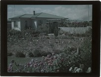Rose garden behind a wooden one-storied house, probably Christchurch